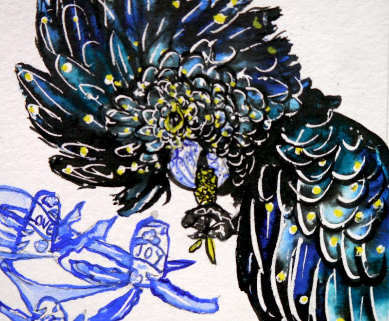 Leo - Mini Red Tailed Black Cockatoo ( Kelly-Anne Love) - Available from KAB Gallery